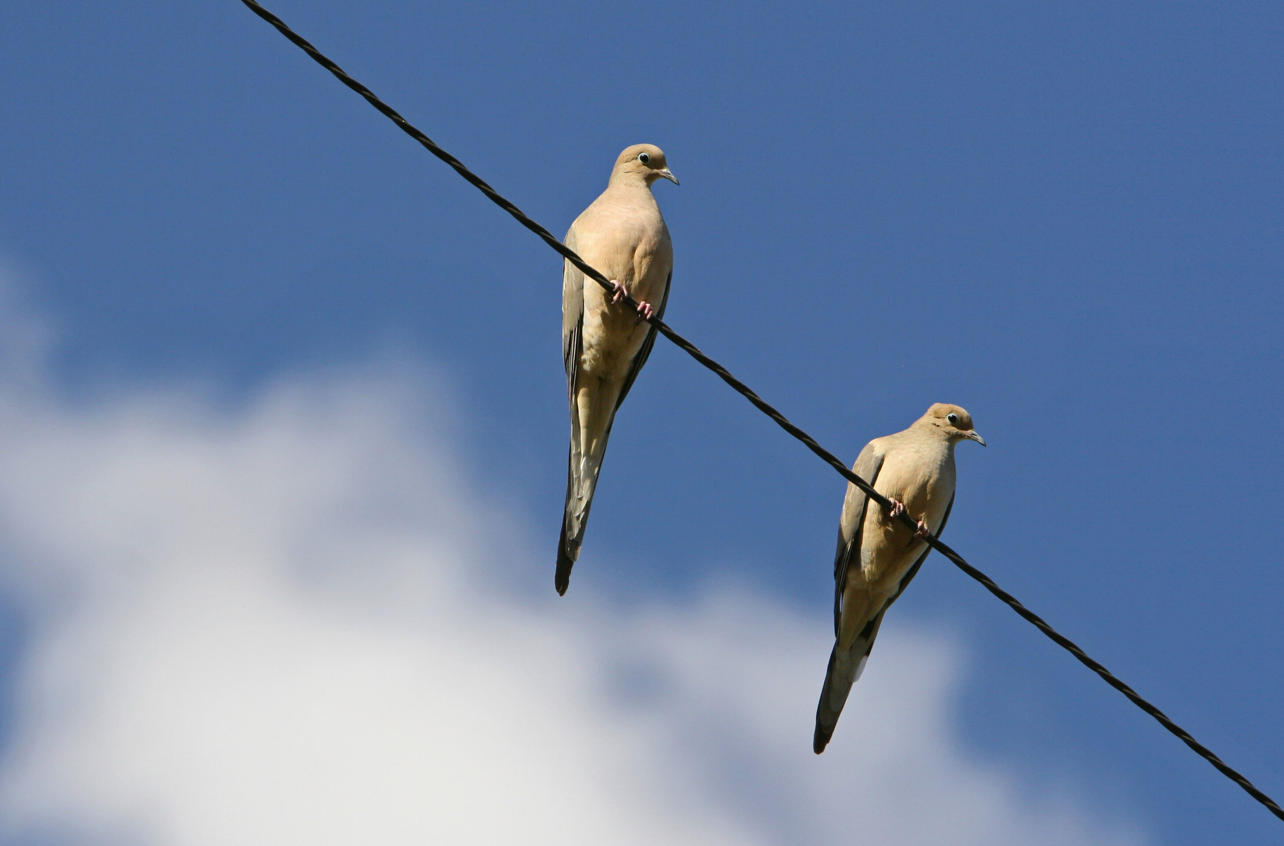 Clinton House Dove Hunting